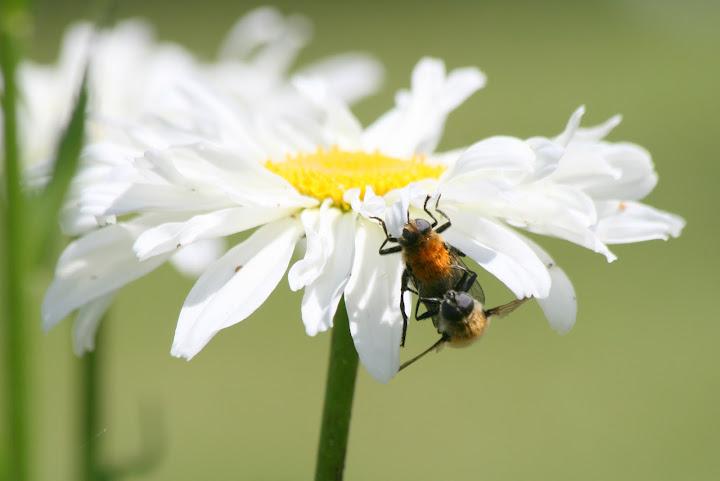 """Birds do it. Bees do it. Let's fall in love."""