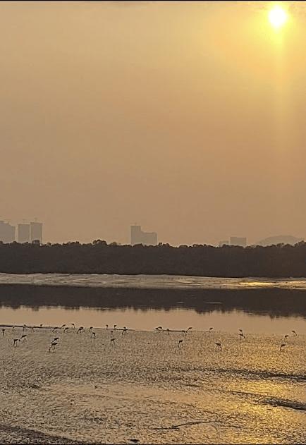 Flamingos & beautiful sunset, Airoli, Navi Mumbai