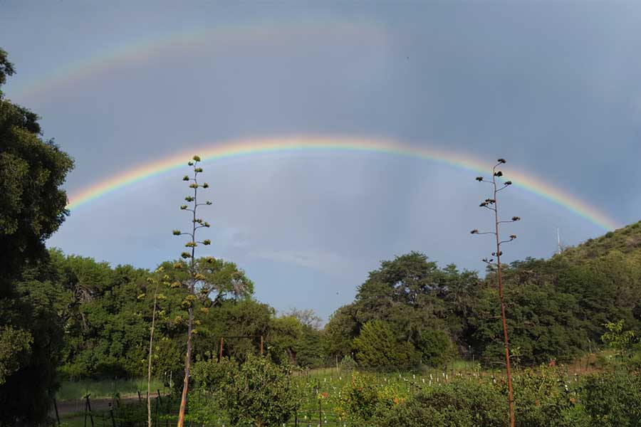 Rainbow over Colibri Vineyard