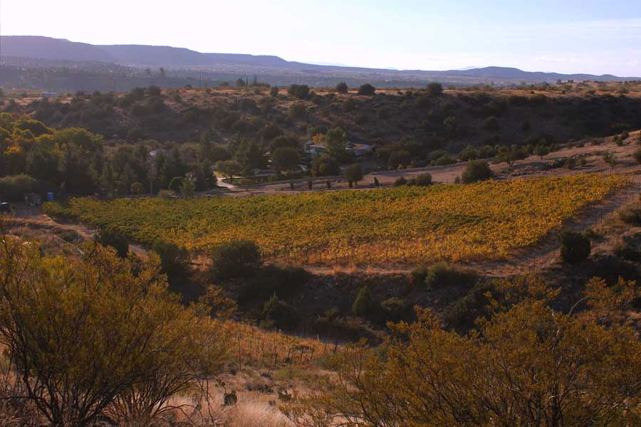 Dos Padres Vineyard, Arizona
