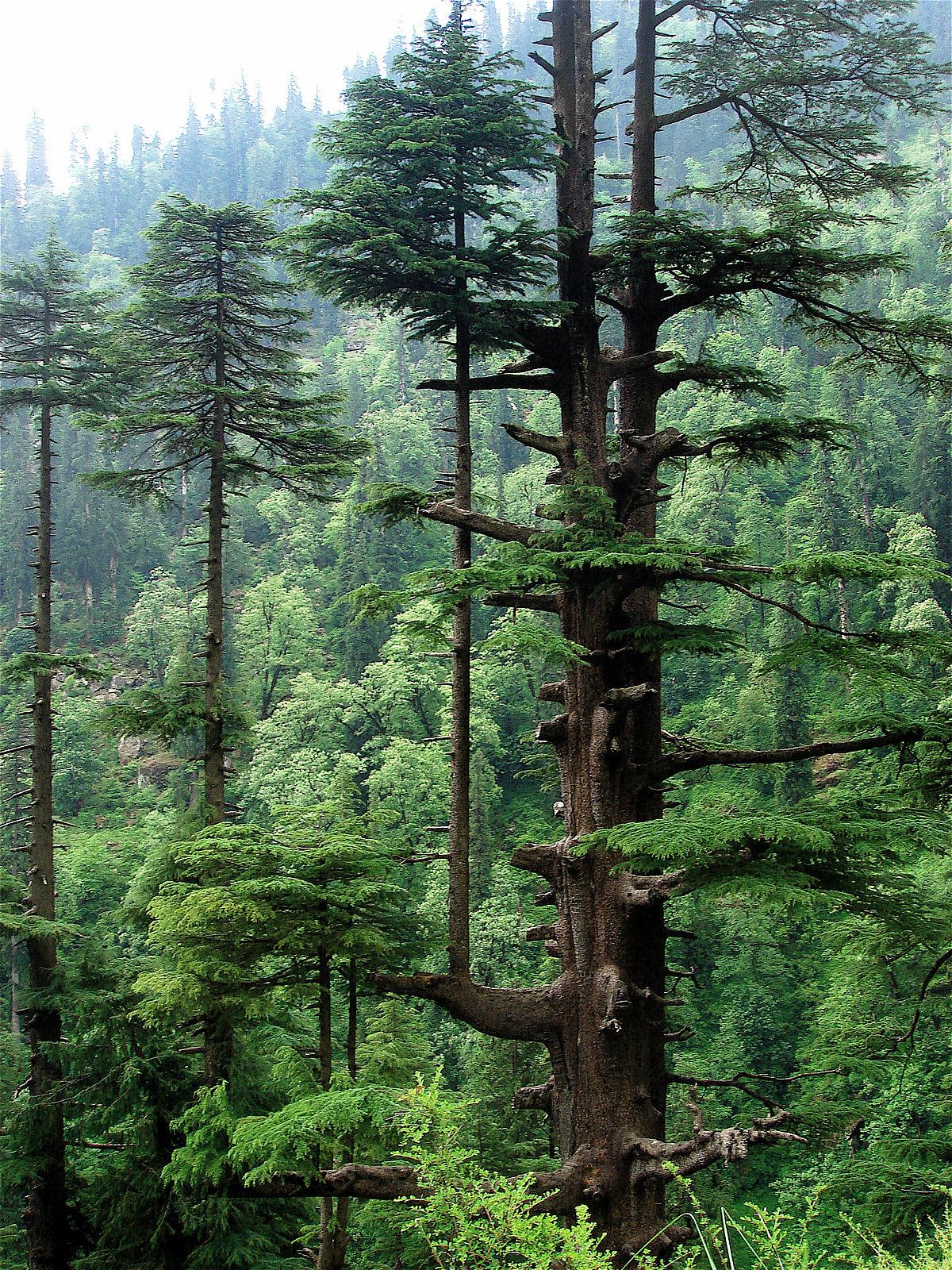 Remebering Shimla