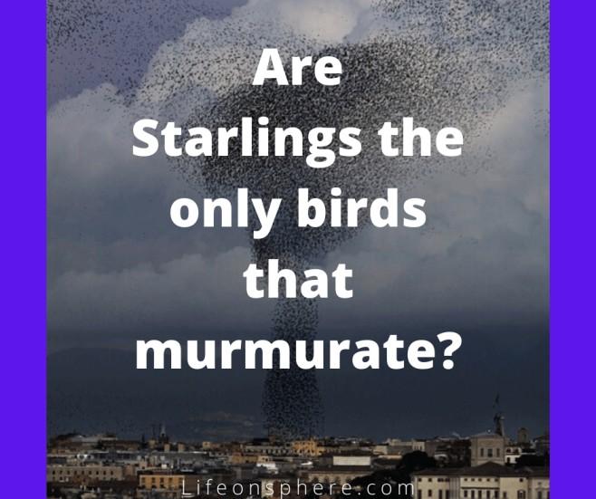 Birds that show murmuration
