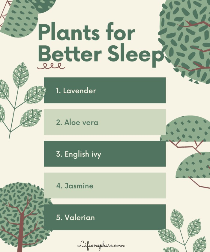 list of plants that help sleep better