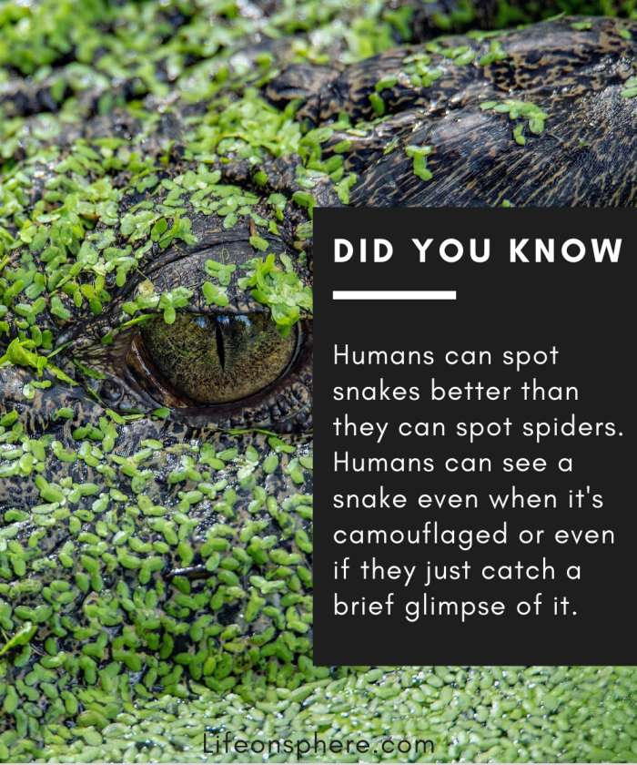 humans can spot snakes even in camouflage