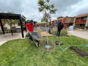 Tree Planting at The Parsons Apartment Homes Vicinity