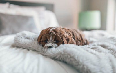 Why Your Pets Will Love the Pet-Friendly Apartments at The Parsons