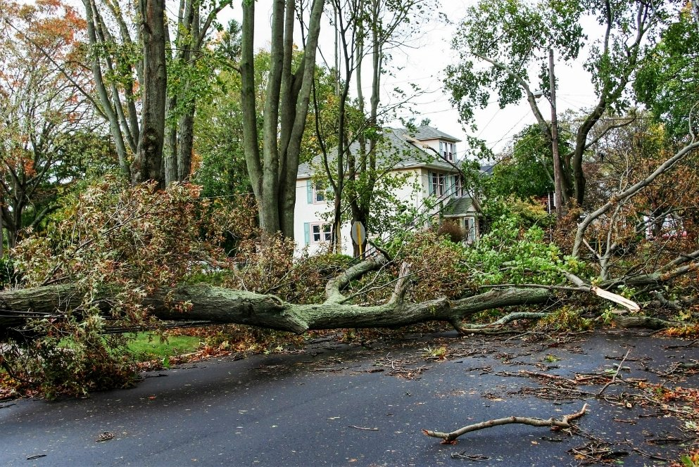 How Do I Know If I Need To Call In a Storm Damage Restoration Company