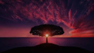 Tree at sunset - Cari Palmer