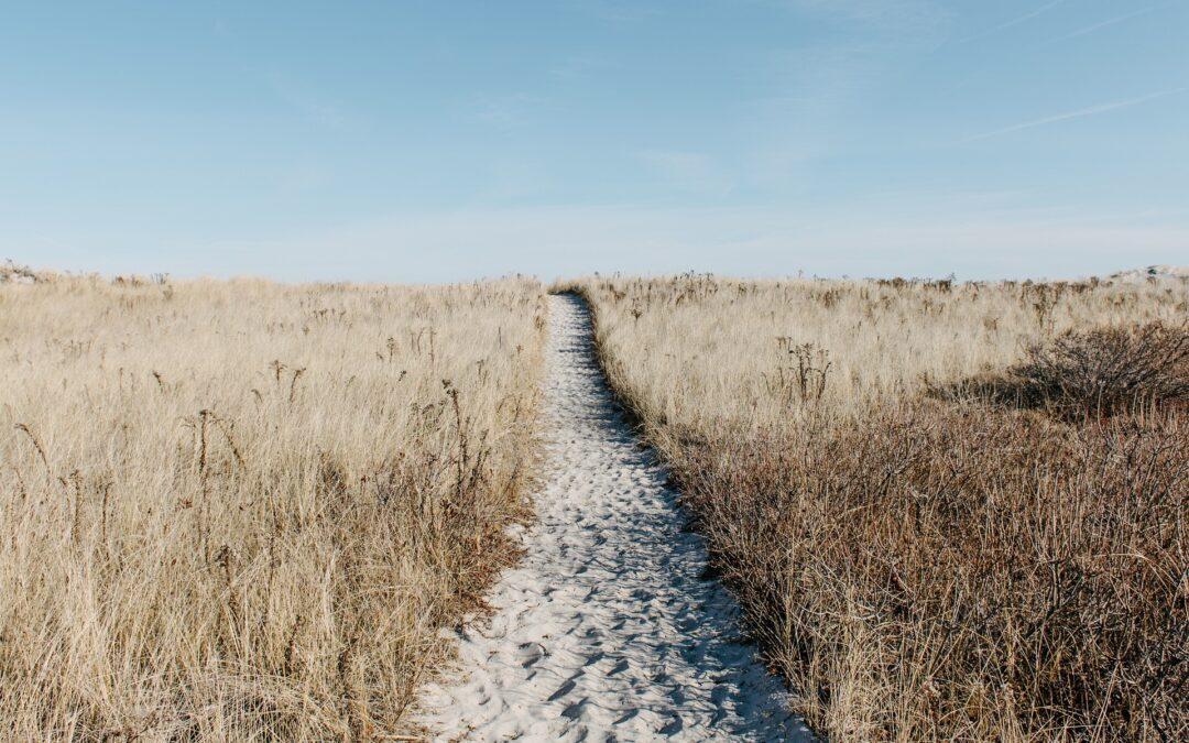 THE PATH BEYOND HARMONY – Breadcrumb Trail