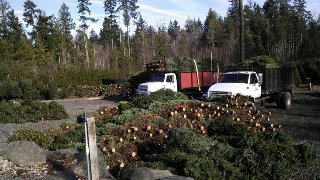 wholesale-trees