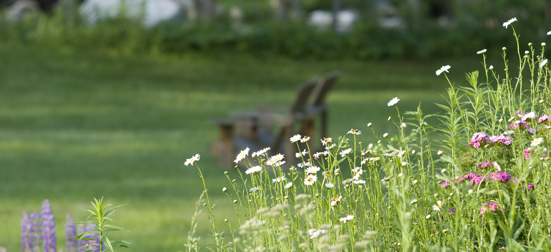 wildflowers with two Adirondack chairs and river in background