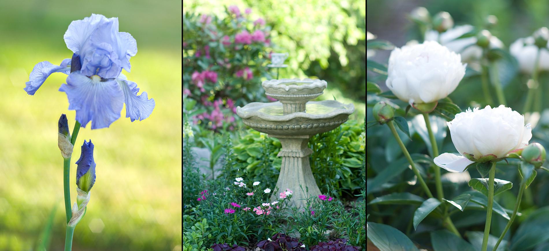 collage of blue iris, fountain in garden, white peonies