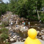 Wildquack Duck Race