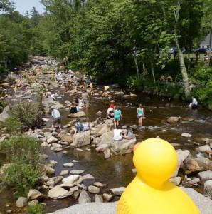 Wildquack Duck Race
