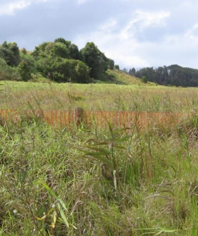Ecologist Grass Owl survey for road construction and development, Ballina Heights estate