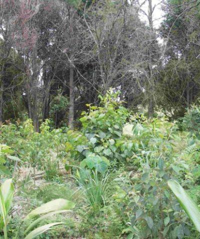 Ecologist rainforest vegetation management plan with weed control and plantings, Tintenbar via Ballina