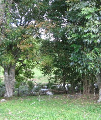Arborist tree protection plan for construction of creek crossing, Teven via Ballina