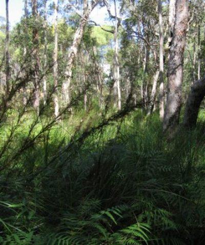 Ecologist wetland vegetation survey in Endangered Ecological Community for conservation property vegetation plan, Bungawalbin Creek via Casino
