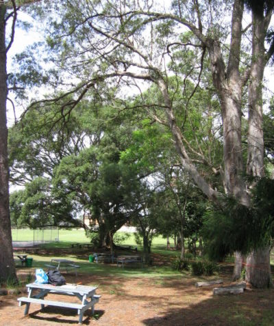 School arborist tree risk assessment, Modanville via Lismore