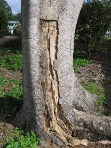 tree risk arborist report 225x300 Arborist Services