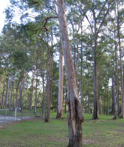 Arborist tree risk assessment and report on hazard trees prior to development, Illuka