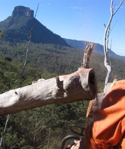 Ecologist fauna spotter catcher aerial tree hollow inspections, Mount Lindesay Highway via Kyogle