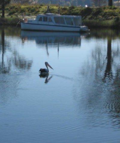 Flora & fauna ecologist impact assessment & report, Sportsmans Creek bridge construction, Lawrence via Grafton