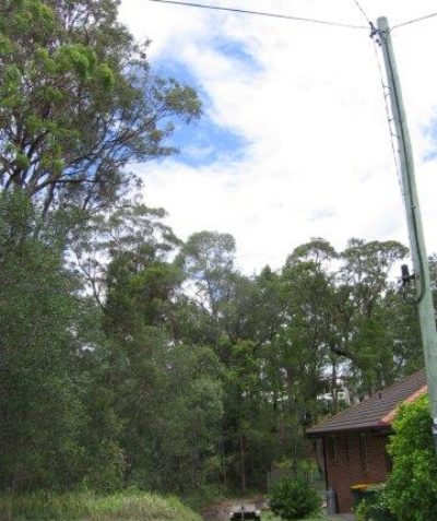 Arborist tree risk assessment and report including house and power line target assessment, Maclean