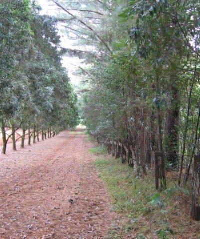 Ecologist vegetation buffer plan prepared for subdivision, Nashua via Bangalow