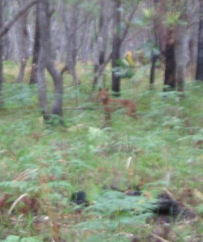 Ecologist wild dog control program, Shannon Creek Dam, via Grafton