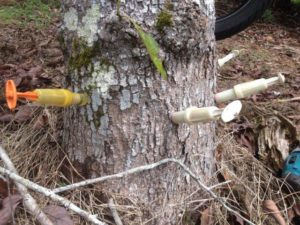 arborist tree stem injection 300x225 Pest and Disease Diagnosis and Treatment
