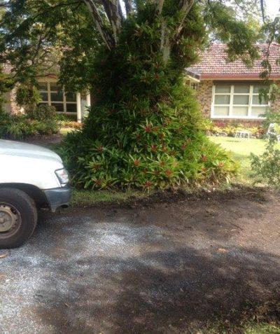 Arborist tree root impact assessment for driveway construction, Goonellabah via Lismore