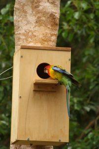 nest box bird hollow 201x300 Wildlife Fauna Nest Boxes