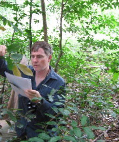 Threatened Green-leaved Rose Walnut confirmed in vegetation survey assessment threatened species search, Coolgardie via Ballina