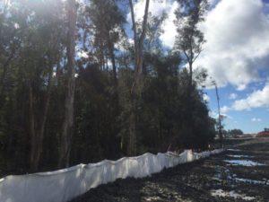 arborist report tree 300x225 Arborist Reports and Plans for Development