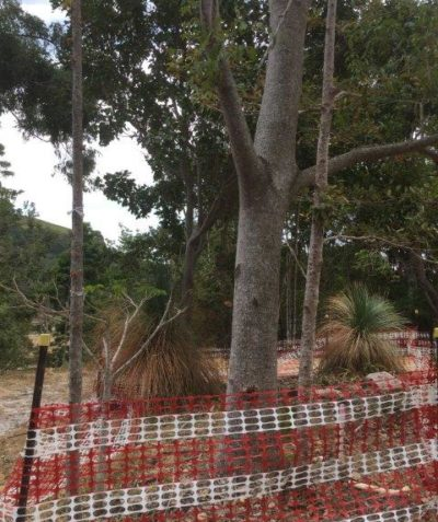 Arborist assessment, report and tree protection plan for house development, Suffolk Park via Byron Bay