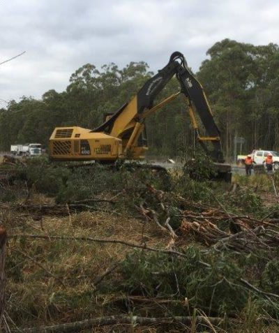 Arborist unsound tree condition, risk assessment and tree removal, Mororo via Yamba