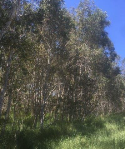 Subdivision ecologist environmental impact assessment and report, Evans Head