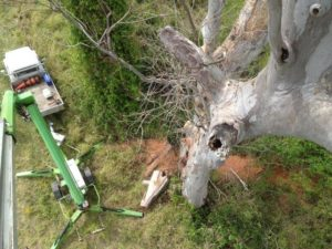 ecologist work tree clearing 300x225 Ecologist Services