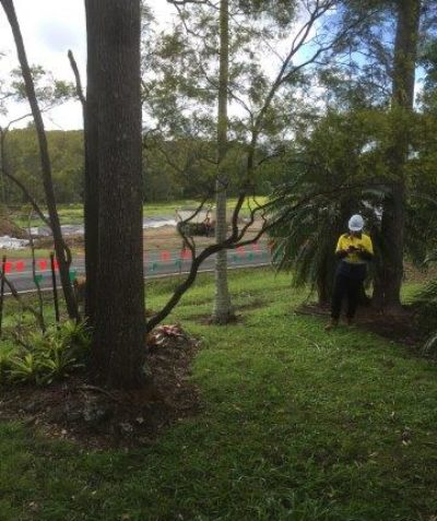 Tree risk assessment with Pacific Complete for Pacific Highway upgrade, Broadwater
