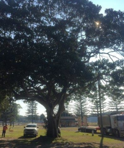 Arborist tree impact assessment report, Evans Head Holiday Park redevelopment