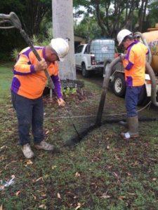 arborist tree root investigation 225x300 Arborist Services