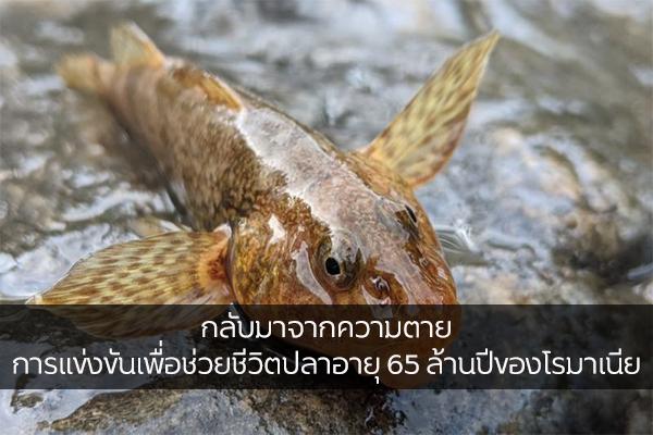กลับมาจากความตาย การแข่งขันเพื่อช่วยชีวิตปลาอายุ 65 ล้านปีของโรมาเนีย