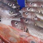 CARICOM SIDS and the WTO Fisheries Subsidies Negotiations