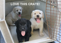 love this crate