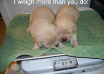 I weigh more than you do