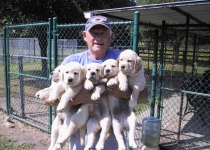 Jim with Dixie pups