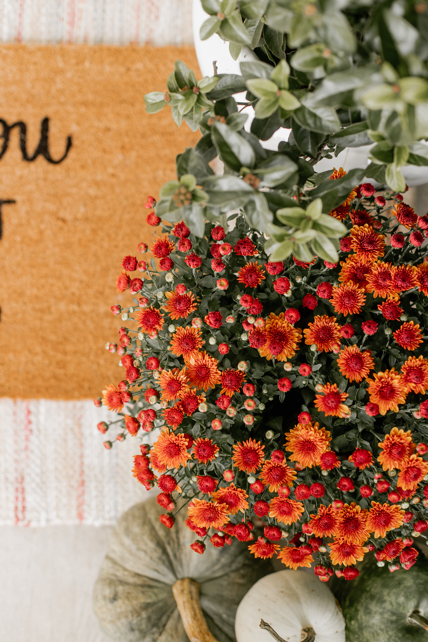 Fall front porch essentials and Fall Plants to Decorate With   Louella Reese