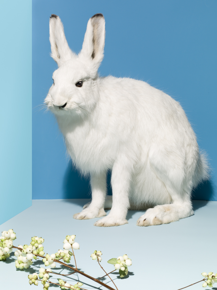 19_Taxidermy_Rabbit_015_Focus
