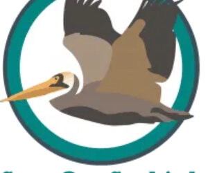 Save Our Seabirds, Sarasota, Florida seeks a Chief Executive Officer